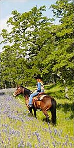Horse on  lupine covered hill